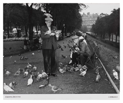 Feeding pigeons in East Princes Street Gardens